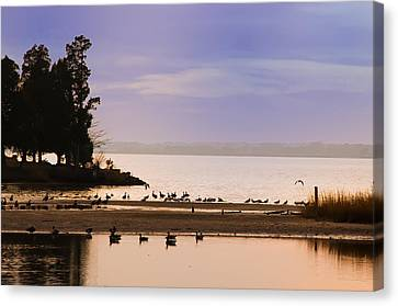 In The Quiet Morning Canvas Print by Bill Cannon