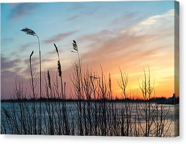 In The Reeds Canvas Print by Kristopher Schoenleber