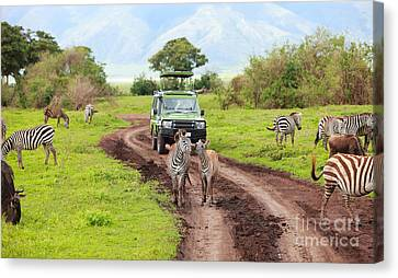 In The Safari Canvas Print by Boon Mee