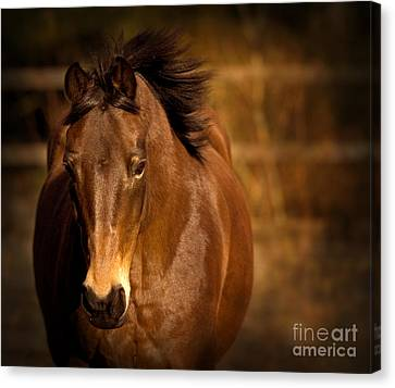 Bay Horse Canvas Print - In The Sepia by Angel  Tarantella