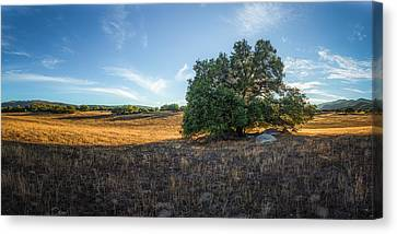In The Shade Of An Oak Canvas Print