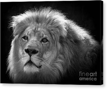 Canvas Print featuring the photograph In The Shadows 3 by Lisa L Silva