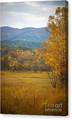 In The Smokies Canvas Print