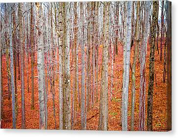 Canvas Print featuring the photograph In The Sticks by April Reppucci