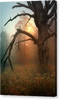 In The Stillness Canvas Print by Rob Blair
