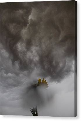 In The Storm Canvas Print by Tim Good
