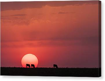 Canvas Print featuring the photograph In The Sun by Scott Bean