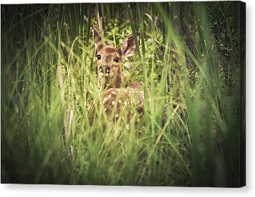 In The Tall Grass Canvas Print by Shane Holsclaw