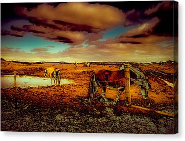 In The Tolt Canvas Print