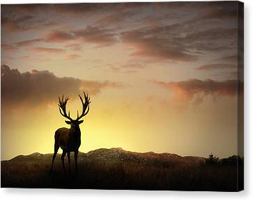 Red Deer Canvas Print - In The Warmth Of The Setting Sun by Jennifer Woodward