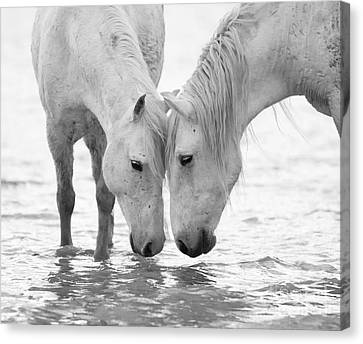 White Horses Canvas Print - In The Water At Dawn II by Carol Walker