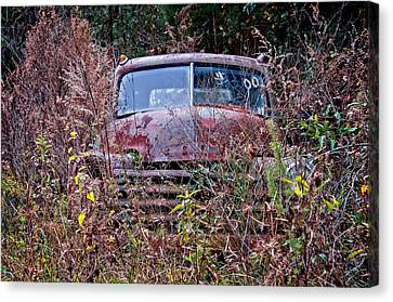In The Weeds Canvas Print by Andy Crawford