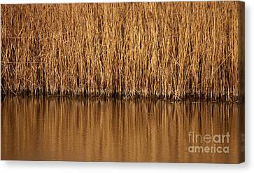In The Weeds Canvas Print by Charles Lupica