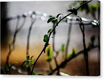 Canvas Print featuring the photograph In The Wire  by Jessica Shelton