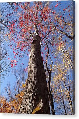 In The Woods 1 Canvas Print