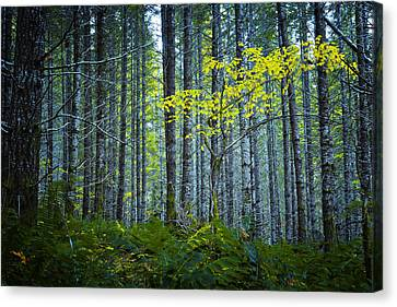 In The Woods Canvas Print by Belinda Greb