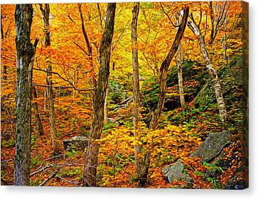 In The Woods Canvas Print by Bill Howard