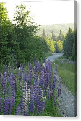 In The Woods Canvas Print by Brenda Ketch