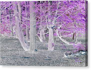 In The Woods Canvas Print by David King