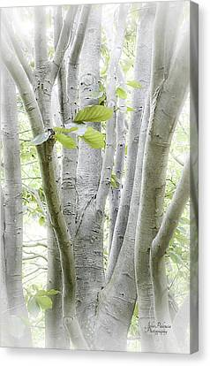 In The Woods Canvas Print by Julie Palencia