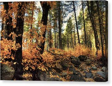 In The Woods  Canvas Print by Saija  Lehtonen