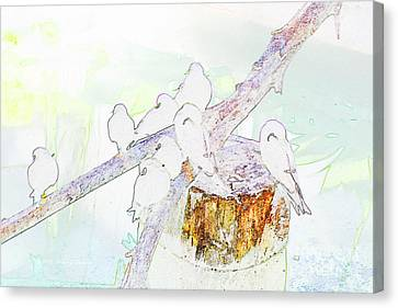 Inca Terns Canvas Print