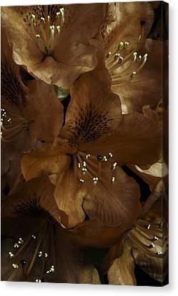 Incognito Canvas Print by Darlene Kwiatkowski