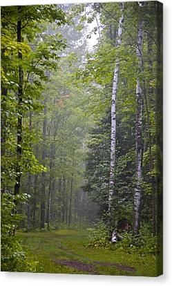 Canvas Print featuring the photograph Incoming Fog by Susan Crossman Buscho