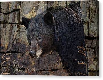 Inconspicuous Bear Canvas Print by Ed Hall