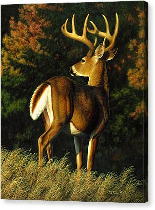 Whitetail Buck - Indecision Canvas Print by Crista Forest
