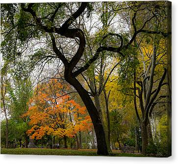 Independent Trees Canvas Print by Glenn DiPaola