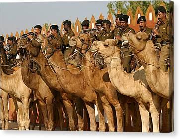 India Camel Band Canvas Print by Henry Kowalski