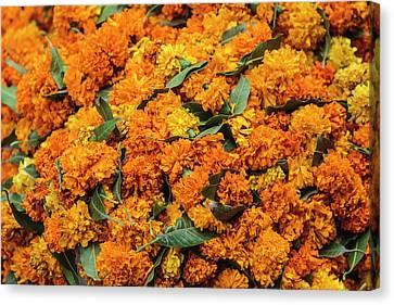 India, Delhi, Heap Of Marigold Offerings Canvas Print by Alida Latham