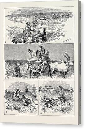 India, Hunting Black Buck With The Cheetah In Baroda 1 Canvas Print by Indian School
