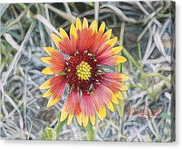 Indian Blanket Canvas Print by Joshua Martin