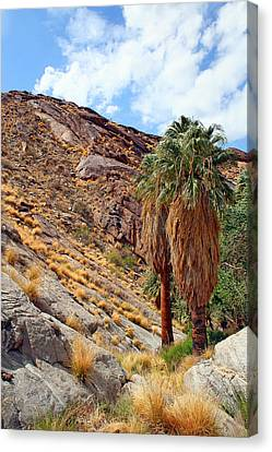 Indian Canyons View With Two Palms Canvas Print by Ben and Raisa Gertsberg