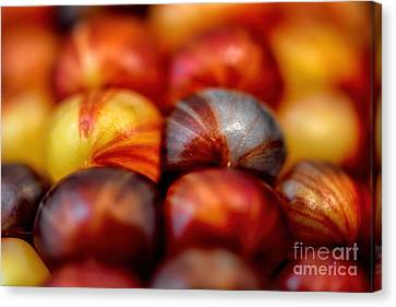 Seed Beads Canvas Print - Indian Corn Kernel Autumn by Henry Kowalski