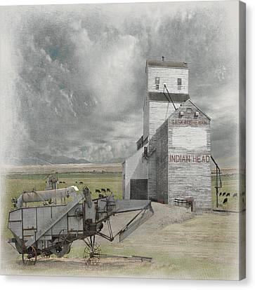 Indian Head Grain  Canvas Print by Jeff Burgess