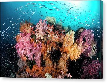 Indian Ocean, Indonesia, Papua, Raja Canvas Print by Jaynes Gallery