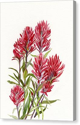 Indian Paintbrush Canvas Print by Sharon Freeman