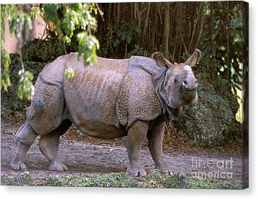 Indian Rhinoceros Canvas Print by Mark Newman