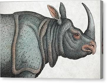 Indian Rhinoceros Canvas Print by Paul D Stewart