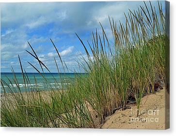Indiana Dunes Sea Oats Canvas Print