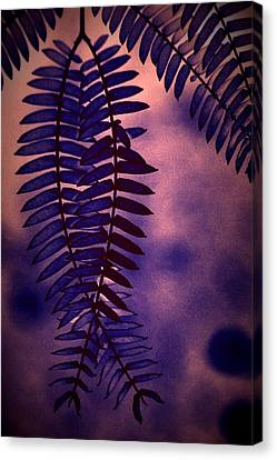 Indigo Haze Canvas Print