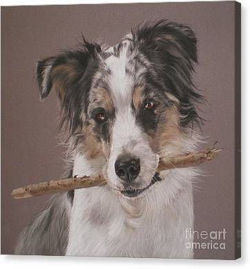 Indy - Border Collie Canvas Print by Joanne Simpson