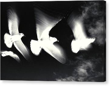 Infrared Gulls Canvas Print by Jerry McElroy