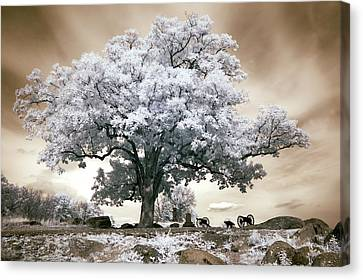 Infrared Tree On A Hill In Gettysburg Canvas Print by Paul W Faust -  Impressions of Light