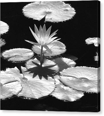 Infrared - Water Lily 02 Canvas Print