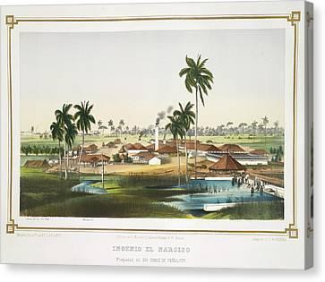 Ingenio El Narciso Canvas Print by British Library