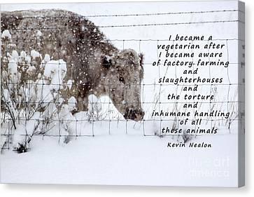 Inhumane Torture Of Animals Canvas Print